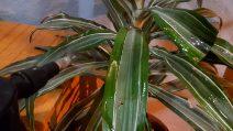 Come utilizzare l'aceto per la cura delle tue piante