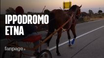 Etna, corse clandestine di cavalli in mezzo a moto e auto: le immagini choc invadono i social