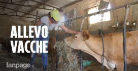 """La storia di Diandra, allevatrice di vacche per restare in Sicilia: """"Così sono felice"""""""