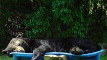 Trova la piscina per bambini e ne approfitta per schiacciare un pisolino