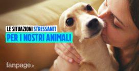 Le situazioni stressanti per i nostri animali