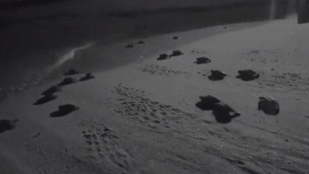 Ascea, l'emozionante corsa verso il mare di 53 tartarughine