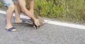 Una vipera ha catturato la sua preda: ragazzo si ferma per liberarla e salvarla