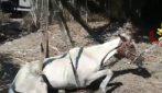 Termoli, vigili del fuoco salvano un cavallo anziano