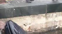 Balena si arena nel porto di Sorrento e si ferisce mentre cerca di liberarsi