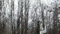 Fiocchi dai Castelli Romani al Lago di Bracciano: nevica in provincia di Roma