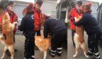Il padrone sconfigge il Coronavirus e rivede il suo cane dopo due mesi: l'incontro è commovente