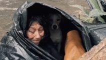 Chiusa in una busta per riparasi: rifiuta l'aiuto della polizia perché non vuole lasciare i suoi cani