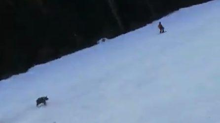 Sciatore braccato da un orso, terrore sulla pista da sci