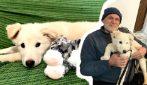 Adottano un cucciolo trovato per strada, nonno Giuseppe non riesce a trattenere le lacrime