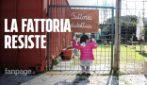 """Animali uccisi alla fattoria dei nonni: """"Resistiamo, ricevuto messaggi da tutta Italia"""""""