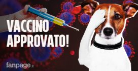 Approvato il primo vaccino anti COVID per gli animali: come funziona e quando sarà disponibile