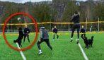 Cane fenomeno della pallavolo: alza la palla in maniera perfetta per la schiacciata