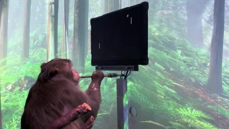 Questa scimmia sta giocando a Pong con la mente