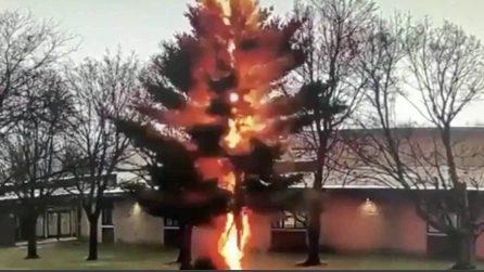 Quanto è potente un fulmine: colpisce in pieno un albero e lo abbatte in mezzo secondo