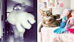 Ogni notte, mentre tutti in casa dormono, questo gatto si dedica a un passatempo molto curioso