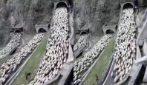 Una coda infinite di pecore occupa la strada: la transumanza vicino Treviso