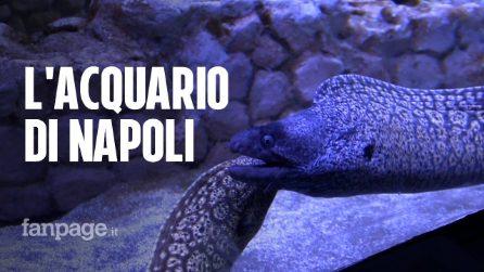 Restaurato e rinnovato: riapre l'acquario di Napoli, luogo centrale per la ricerca e per la città