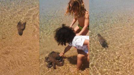 Il polpo ha voglia di coccole: si avvicina ai bambini, si fa accarezzare e poi va via