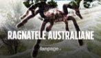 L'Australia è stata ricoperta di ragnatele da migliaia di ragni: la spiegazione degli esperti