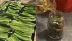 Peperoni verdi sott'olio: la ricetta per averli perfetti e saporiti