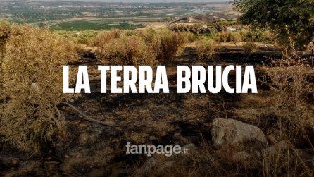 """Bruciano gli uliveti nel Catanese: """"Sono incendi organizzati, dietro una mano criminale"""""""