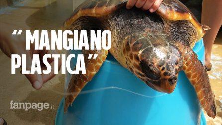 """A Lampedusa il centro che salva le tartarughe marine: """"Dai loro intestini esce solo plastica"""""""