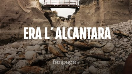 Sicilia, il fiume Alcantara non c'è più: pesci morti e anche le famose gole soffrono