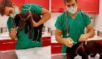 Il trucco del veterinario per vaccinare i cagnolini