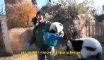Il racconto dei mestieri: Animal Keeper