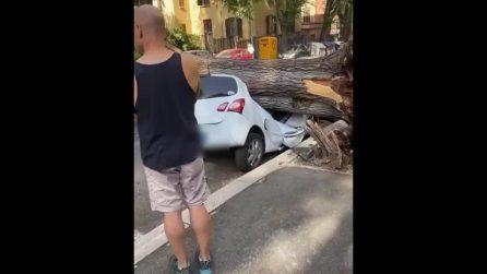 Paura a Roma, grosso albero cade per strada vicino alla fermata dell'autobus: auto distrutte