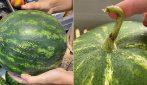 5 trucchi per scegliere un'anguria dolce e matura al supermercato