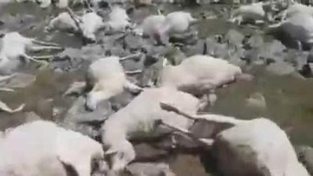 Fulmine uccide oltre 500 pecore: lo scenario è terrificante