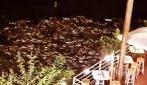 Roma, numerosi pesci morti sul pelo dell'acqua del Tevere