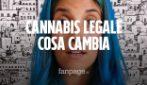 Cannabis legale in Italia e referendum: come cambia per l'uso personale