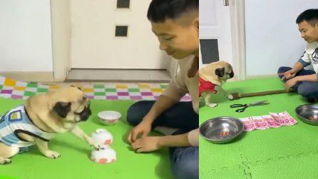 Gioco delle tre tazze e morra cinese: il padrone sfida il suo cane